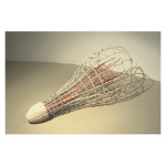 "Polyp ©2005, Reed, wood, waxed linen, wire, wood stain, 30"" x 12 x 12"""